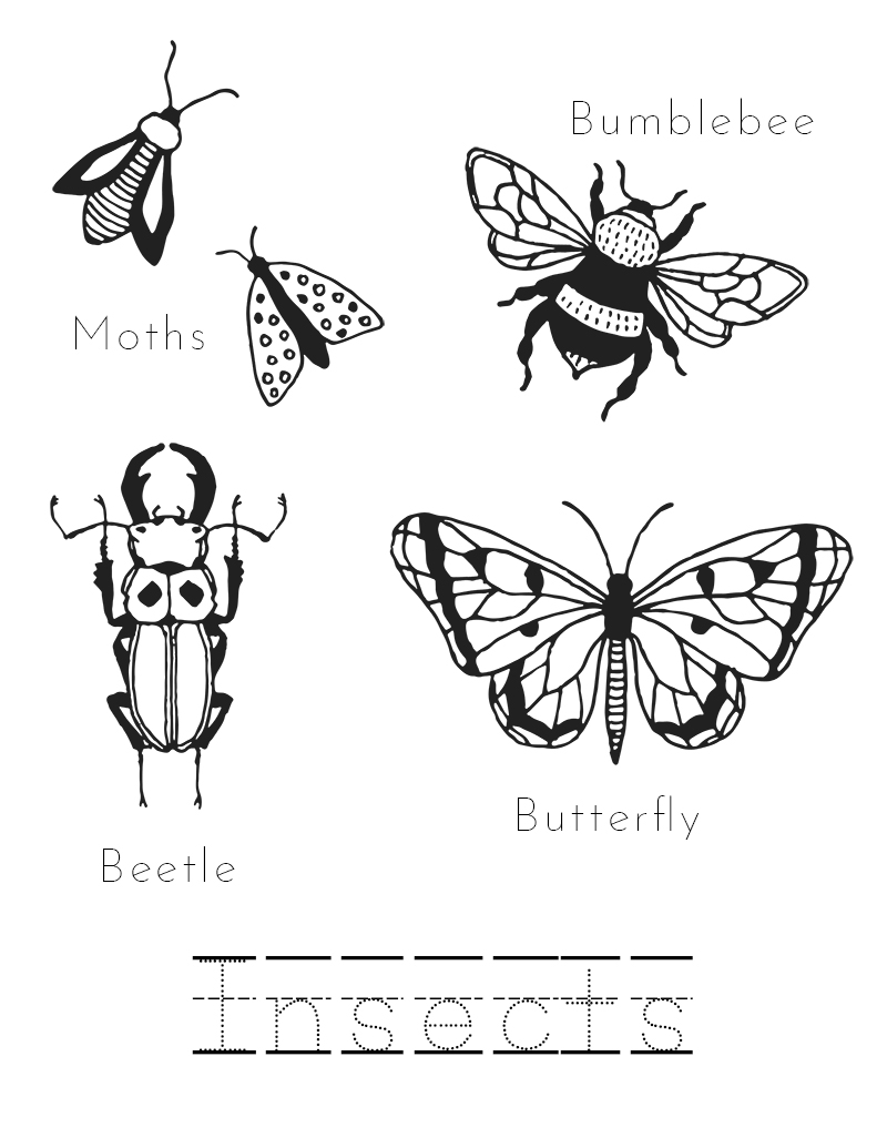 Printable Insects Coloring Page - Mama Wild